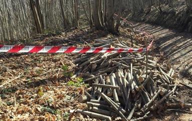 Rota Greca (CS) – Furto di legna, due arresti del CFS