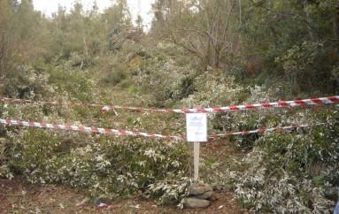 San Lorenzo Bellizzi (CS) – Furto di legna. Intensificati i controlli nel Parco del Pollino