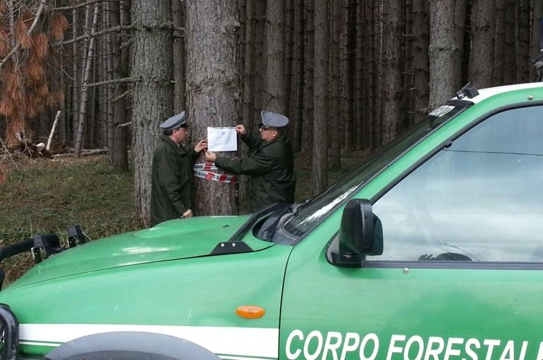 """BOCCHIGLIERO (CS) – Posta sotto sequestro vasta are boscata di """"Calabria Verde"""""""