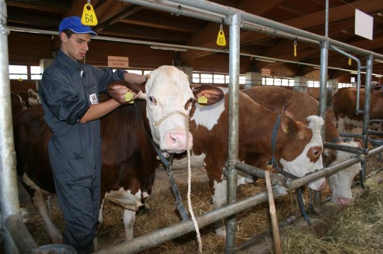 Calabria – Coldiretti – L'Associazione Regionale Allevatori è al collasso