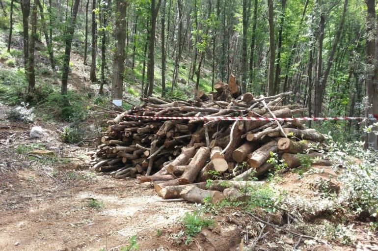 San Sosti (CS): Eseguito sequestro in area boschiva
