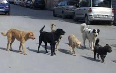 Corigliano: lotta al randagismo, quattro cani tornano liberi